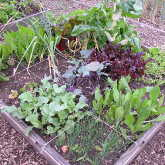 organic gardening, horticultural therapy