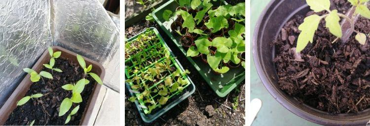 Frugal Gardening - Raising your seedlings with care