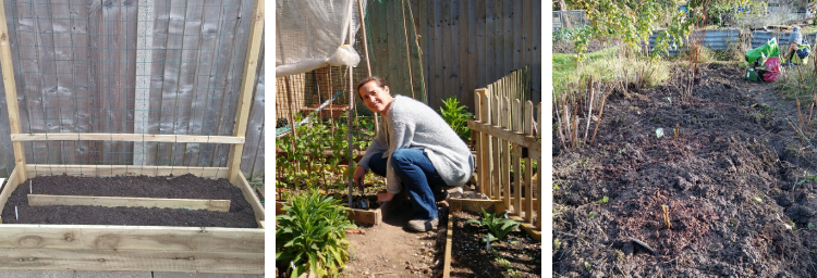 On the allotment - the plot